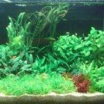 Aquarium-Pflanzen